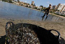 Hiszpania. Tony martwych ryb na plaży