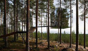 Moda na hotele na drzewie - teraz także w Polsce!