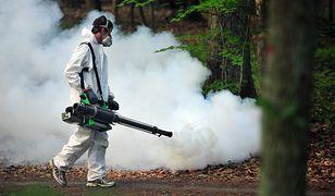 Pryskanie nie zawsze skutecznie likwiduje komary