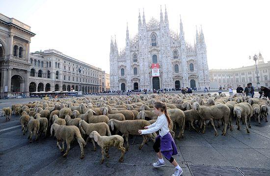 Zwierzęta sparaliżowały miasto - zobacz
