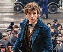 """Powrót do świata Harry'ego Pottera. """"Fantastyczne zwierzęta"""" wkrótce w kinach"""
