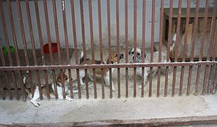 Psy trafiły do schroniska