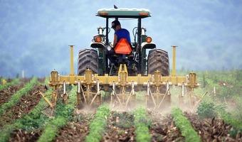 Praca po studiach rolniczych