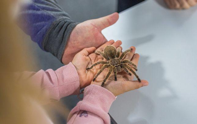 Wrocław. Wystawa pająków w Sky Tower znów otwarta. Czeka na zwiedzających do końca czerwca