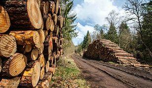Zarobki w lasach: 7 tys. zł dla leśnika