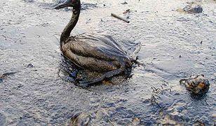 Na dnie Bałtyku tyka bomba ekologiczna