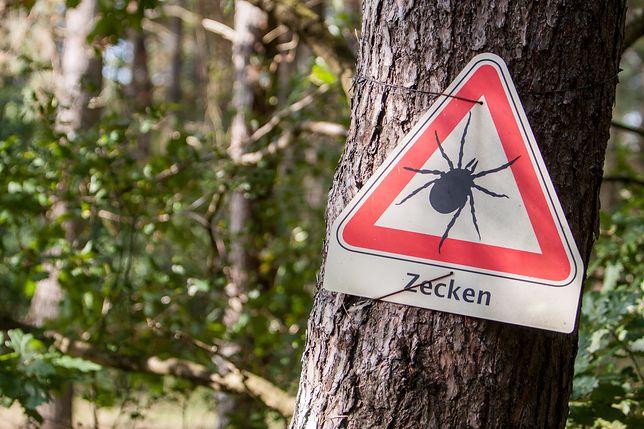 Kleszcze zaobserwowane w Niemczech są znacznie większe niż te, które żyją w Polsce