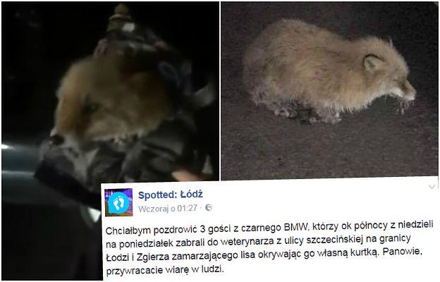 """Łapki lisa przymarzły do drogi. """"3 gości z BMW"""" uratowało zwierzaka przed zamarznięciem"""