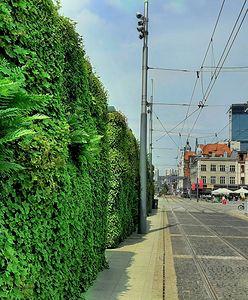 Katowice. Miasto promuje zielone dachy. Będą zwolnienia z podatku