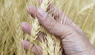GMO tylnymi drzwiami