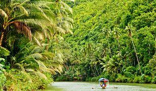 Lasy tropikalne pomagają nam coraz mniej.