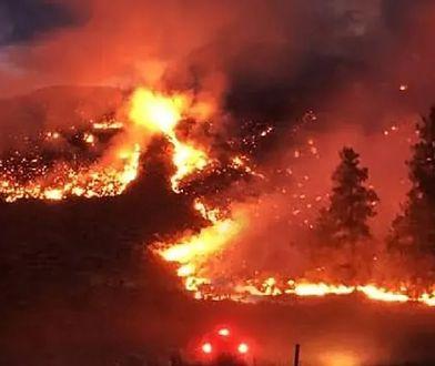 Pożary w Amazonii są poważniejsze niż w czerwcu zeszłego roku