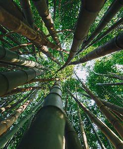 """Amazonia umiera? """"Zielone płuca Ziemi"""" uwalniają już więcej CO2 niż pochłaniają"""