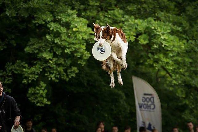 Latające psy na Polu Mokotowskim!