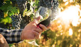 Winnica i wino Leonarda da Vinci. Koneserzy będą zachwyceni