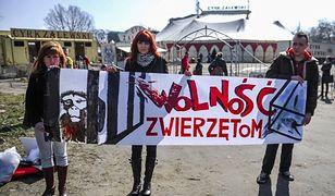 Coraz więcej miast w Polsce zakazuje wjazdu na swój teren cyrkom ze zwierzętami. Jak rzeczywiście wygląda tresura zwierząt i w jakich warunkach są przetrzymywane?