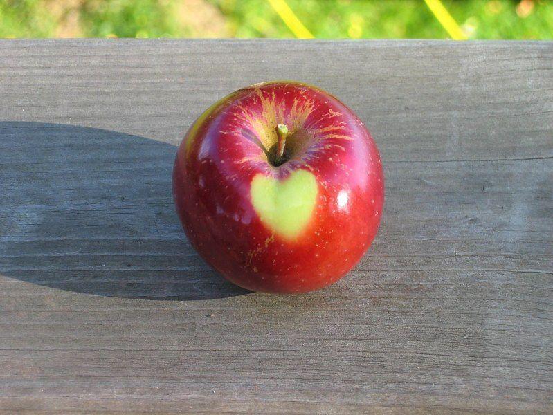 Jabłko z sercem