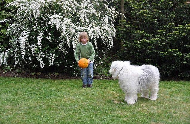 Zwierzęta zapobiegają alergiom w przypadku dzieci