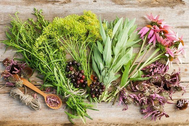 Terapia zielarska przy cukrzycy