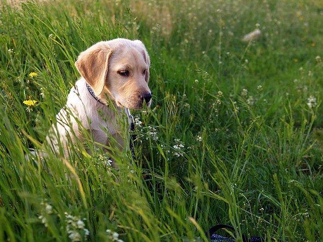 Zwierzęta obniżają ryzyko chorób krążenia
