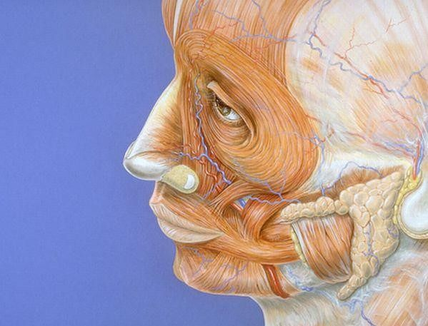 Atlas anatomiczny - ludzka twarz