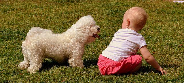 Alergia na psa u dziecka