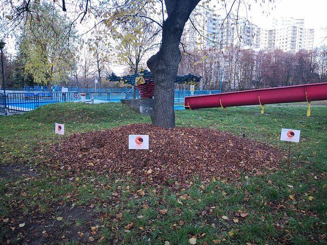 Warszawa. Dla jeży zostaną usypane domki z liści