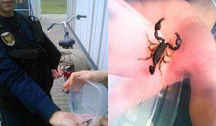 Skorpion na Mokotowskiej