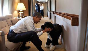 Barack Obama żegna wiernego przyjaciela