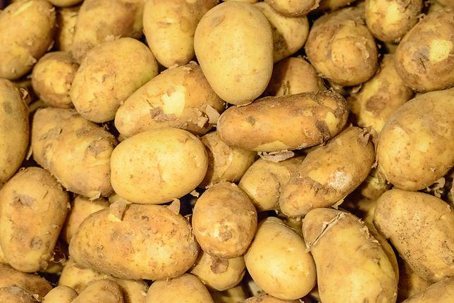 Młode ziemniaki z Polski można rozpoznać