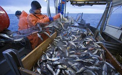 Świeża ryba nad Bałtykiem? To tylko flądra i śledź