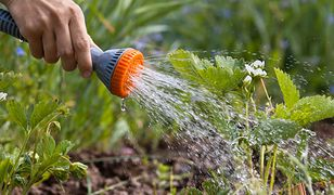 Wykorzystując nowoczesne urządzenia ogrodnicze, możesz zapewnić roślinom stały dostęp do wody, działając przy okazji ekonomicznie i ekologicznie.