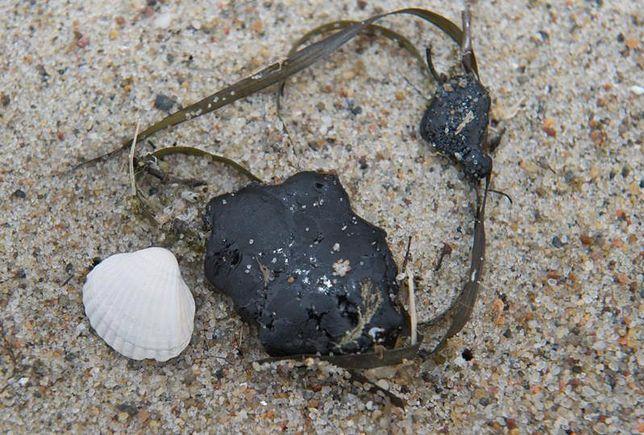 Skażone plaże nad Bałtykiem
