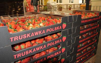 Krajowe truskawki już w sklepach. Ile kosztują?