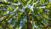 Kara za wycięcie drzewa często wyższa niż wartość naszej działki