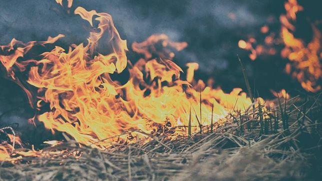 Seria pożarów na Mazowszu. Przez trzy dni 436 pożarów traw i lasów
