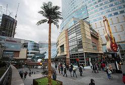 Nowa palma w Warszawie. Stanęła w centrum miasta