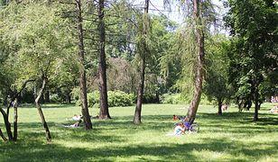 Rzeź drzew na Pradze-Południe. W ciągu 6 lat wycięto ich blisko 7 tysięcy