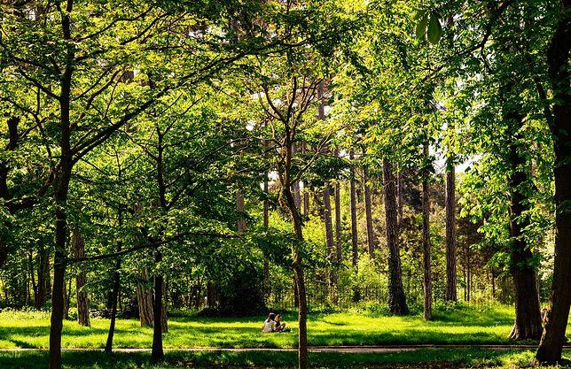 Nowe badania. Zdaniem naukowców, dzieci zamieszkujące tereny zielone mają wyższe IQ