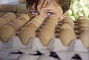 Afera dioksynowa w Niemczech - zamknięto tysiące farm