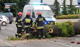 Strażacy usuwają złamane drzewo na jednej z toruńskich ulic