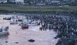Brutalna rzeź ssaków na Wyspach Owczych