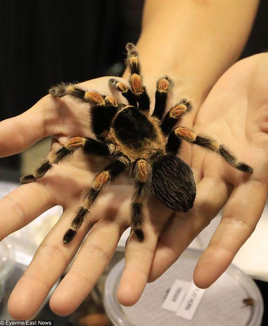 Skradziono 7 tysięcy owadów i pająków o wartości 40 tysięcy dolarów
