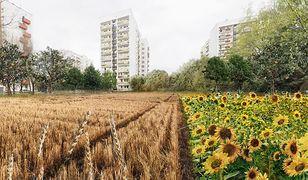 Pomiędzy blokami osiedla Podwawelskiego w Krakowie ma powstać miejska farma