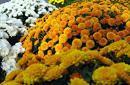 Dla tysięcy firm sprzedających kwiaty i znicze listopadowe święto to okres żniw