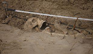 50 szkieletów przy drodze S8