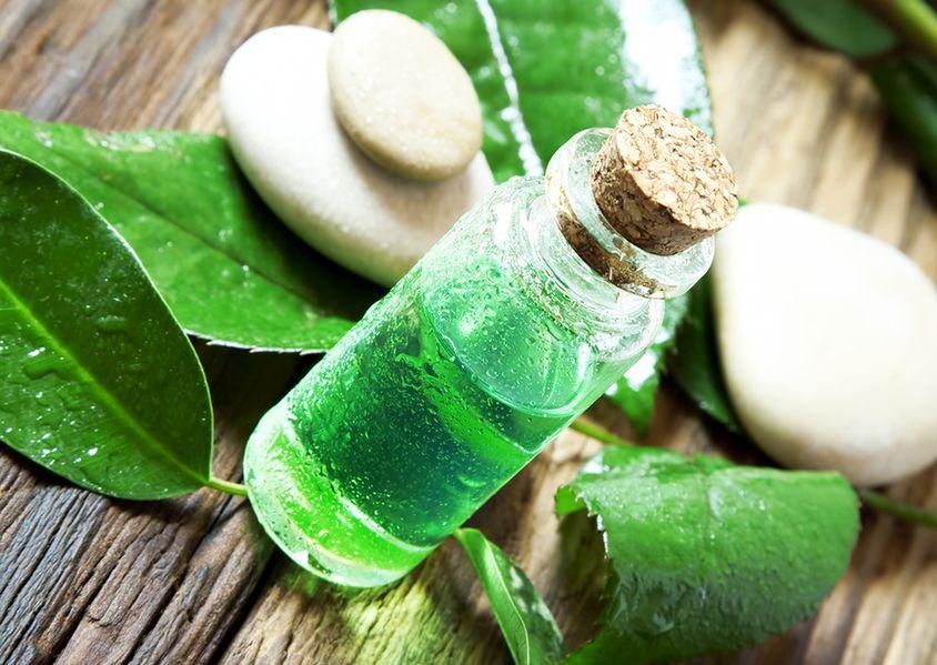 Olejek z drzewa herbacianego to skarbnica zdrowia