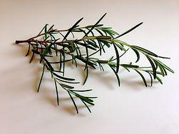 Zdrowe zioła, które warto włączyć do swojej diety