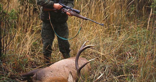 Ogonki. Myśliwy zmarł po upolowaniu jelenia