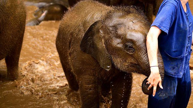 W Patara Elephant Farm każdy może opiekować się słoniem przez cały dzień